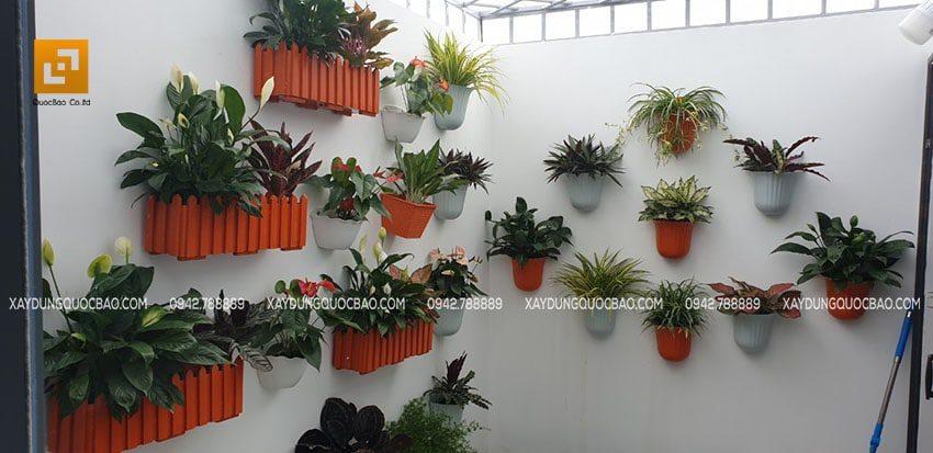 Chủ nhà vốn là người yêu thiên nhiên nên tậu về vườn của mình nhiều chậu cây cảnh treo tường